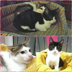 Nowa porcja kociaków do adopcji w lecznicy